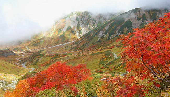 autumn leaves on Japan's alpine route