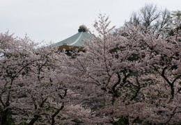 Top 5 Spots for Cherry Blossoms in Tokyo